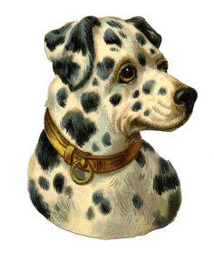 Free-Image-Dog-Vintage-GraphicsFairy.jpg (1271×1500)