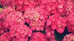 vintage flower hd widescreen wallpapers