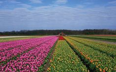 Haarlem and the Flower Bulb Region - Haarlem - Holland.com