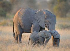 Маленькие детеныши слона