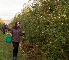 Food forests are shaping up to be the next evolution of urban farming.