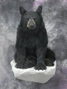 Bear mounts