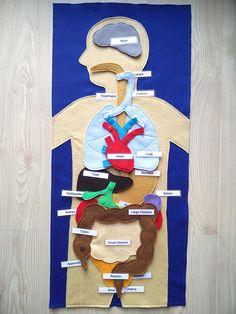 Human organs felt play mat, Montessori anatomy materials, the human body, science play mat Felt Human Body with Labels Body Human Body Activities, Science Activities For Kids, Science Experiments Kids, Science Projects, Human Body Organs, Human Body Parts, Organs In The Body, Body Parts For Kids, Felt Play Mat