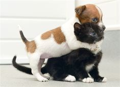 Seriously the cutest thing ever. Puppy and kitten think they're sisters (SWNS)