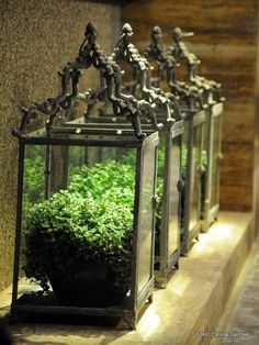 Lanterns as terrariums, beautiful... whether its just one, or a row filled with greenery.