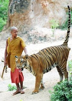 Buddhist Monk & Tiger!  It's a Sanctuary!  :)