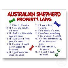 Australian Shepherd Laws