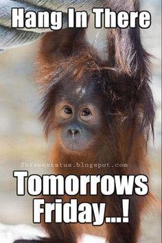 Todays Funny Memes - Thursday meme (Thursday motivation meme)