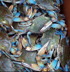 blue crabs remind me of summer