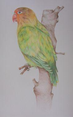 bonte fischeri, aquarelpotlood Parrot, Animals, Parrot Bird, Animales, Animaux, Parrots, Animal, Animais