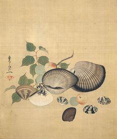"""Shells"" painted by Suzuki Kiitsu in the century. The elaborate geometric patterns on the shells are mesmerizing. Japanese Painting, Chinese Painting, Chinese Art, Japanese Art Styles, Japanese Prints, Marine Style, Art Chinois, Art Asiatique, Art Japonais"