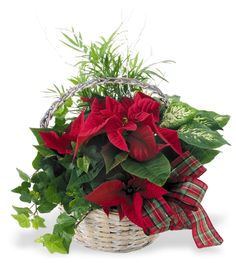 Holiday Plant Basket-Atlanta Florist Hall's Flower Shop