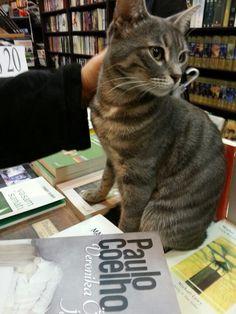 Paulo Coelho book and a cat