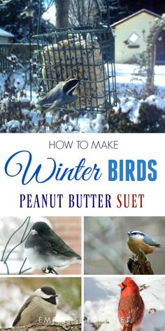 This homemade peanut butter suet recipe is for wild birds in the winter when food is scarce. It does not contain beef lard like traditional and store-bought suets do. Wild Bird Food, Wild Birds, Suet Recipe, Bird Suet, Suet For Birds, Wild Bird Feeders, Suet Cakes, Bird Seed Ornaments, Homemade Bird Feeders