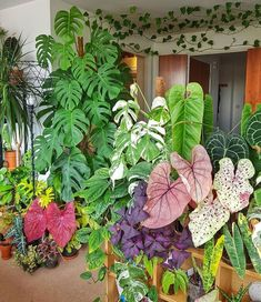 Loving all the plant gang helloplantlady is the new helloplantlover Image by a_londoners_urban_jungle Room With Plants, House Plants Decor, Plant Decor, Exotic Plants, Tropical Plants, Plant Design, Garden Design, Indoor Garden, Indoor Plants