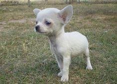 Filhote de cachorro feinho