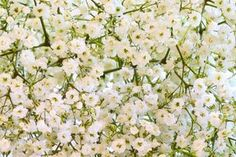 How to Dry Baby's Breath Flowers (5 Steps) | eHow