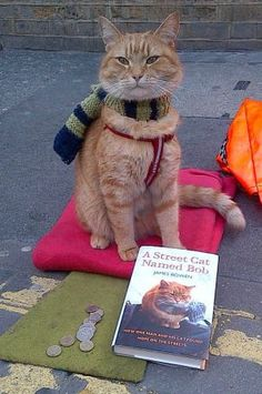 A Street Cat Named Bob - this is one of the most touching, beautiful stories I have ever read.
