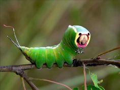 Alienígenas do Planeta Terra: Os 15 insetos e animais que mais se parecem com aliens