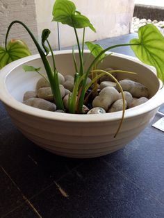 Jenggala's Giant ceramic bowl for indoor plants