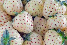 Connaissez-vous la fraise blanche ? Une fraise qui a un goût d'ananas !