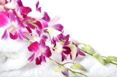 Spa Treatment -Purple Dendrobium Orchid on White Yowel stock photo