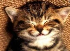 smily kitty