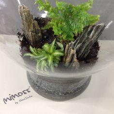 Yağmur Plant Design, Indoor Plants, Home Decor, Inside Plants, Decoration Home, Room Decor, Home Interior Design, Home Decoration, Interior Design