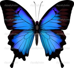 Purple and Blue Swallow Butterfly | Blue butterfly papilio ulysses (Mountain Swallowtail) isolated vector ...
