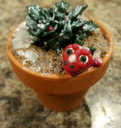 Berry of the Pot Dragons.