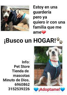 ADOPCIONES DE PERROS: este perrito llegó pedido hace 5 días pero según h...