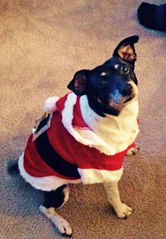 Reggie couldn't wait for Christmas morning!  Hamilton Veterinary Hospital - Veterinarian In Trenton, NJ USA :: Current Contest