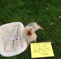The Funniest Animal Shaming Pictures Of The Month – 23 Pics