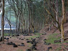 Pololu Valley Big Island Hawaii.  Magical