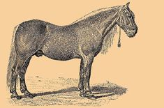Bityug. The Bityug (or Bitcuk in Turkey) was a handsome trotting breed that originated in Russia by Tsar Pierre Le Grand. Named for the Bityug River, this breed was developed from local Voronezh steppe horses crossed with Danish, Dutch breeds along with Orlov Trotter.
