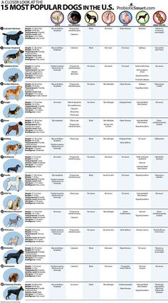 A Closer Look at the 15 Most Popular Dogs in the U.S.