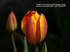 Versículos do Dia  Pois o Senhor, por causa do seu grande nome, não desamparará o seu povo; porque aprouve ao Senhor fazer-vos o seu povo.1 Samuel12:22-22  Vós adorais o que não sabeis; nós adoramos o que sabemos porque a salvação vem dos judeus.João4:22-22