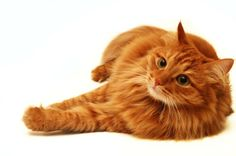 Urinary Obstructions In Pets: Symptoms & Treatments