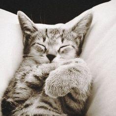 Misty's cute kitten!