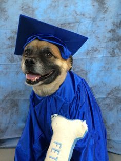 When you get your PHD  #photography #backdropoutlet #dogs #dogphotos #animalcostume #bdo #Pets #photoshoot #shootideals #pug #chow #mixbreed