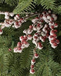 A dash or red and wintry white. Balsam Hill's Snowy Red Berry Picks add delightful and woodsy winter detail to your Christmas décor.