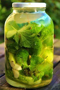V kuchyni vždy otevřeno ...: Kvašáky z přerostlých nakládaček Pickle Jars, Pesto, Pickles, Cucumber, Veggies, Homemade, Canning, Health, Garden