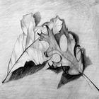 Kreslení – Jak kreslit listy stromů