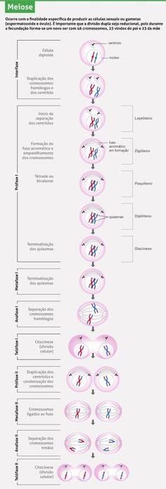 Divisão celular: mitose e meiose