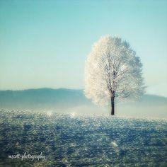 - Winter Tree Landscape Print  Snow White Tree  by MScottPhotography