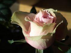 es passt zum sommer Rosé von Rotkäppchen