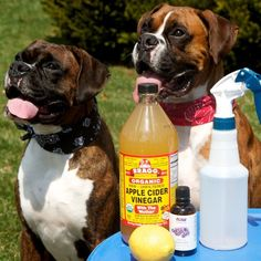 6 Ways to Naturally Prevent and Get Rid of Fleas on Dogs. I have actually used the vinegar wash and it does work, but do it outside, it makes fleas flee and you don't want them jumping off into your carpet inside.