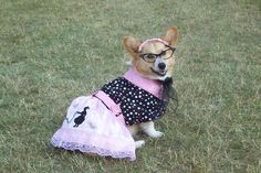 Howie needs to get a girlfriend that dresses like this. so cute!