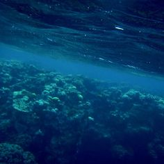 Sadly this photo was taken with my old point and click before I bought my slr. Great Barrier Reef is definitely worth a revisit though! #greatbarrierreef #reef #cairns #Australia #sabreworkz #nature #ocean #wildlife #aquatic by sabreworkz http://ift.tt/1UokkV2