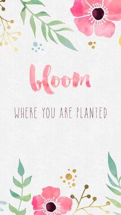 Bloom iPhone wallpaper